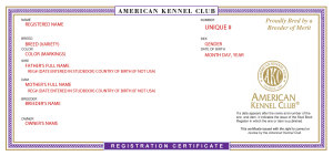 Sample registration certificate from the American Kennel Club