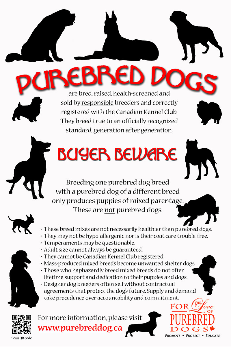 Purebred-Dog-Poster-Buyer-Beware-red-black-white-12-x-18-inches-web