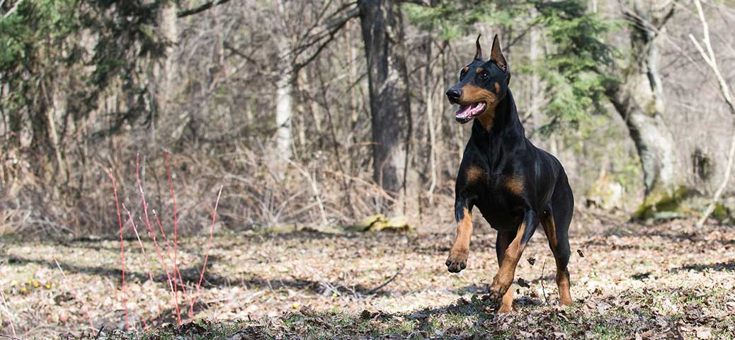 © WilleeCole Photography - www.bulldaciousbulldogs.com
